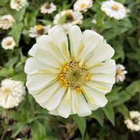 一朵白色的花
