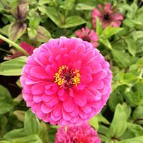 一朵粉色的花朵