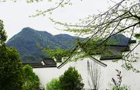江西婺源民宿风景