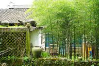 江西婺源 -竹子