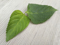 两片绿叶木纹面