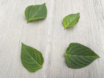 木纹绿叶图