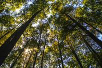 秋日阳光树林