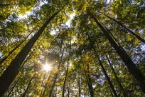 阳光树林秋日