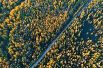 穿越金秋树林的公路(航拍)