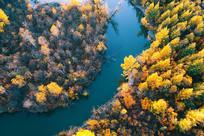 穿越金秋树林的河流(航拍)