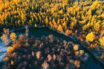 穿越金秋树林的小溪(航拍)