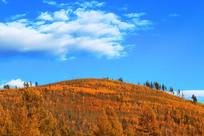 山脊上的树林秋色