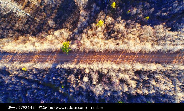 航拍晚秋树林里的公路 图片
