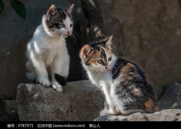 两只可爱的小花猫图片