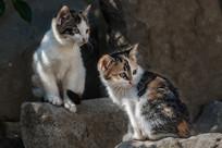 两只可爱的小花猫