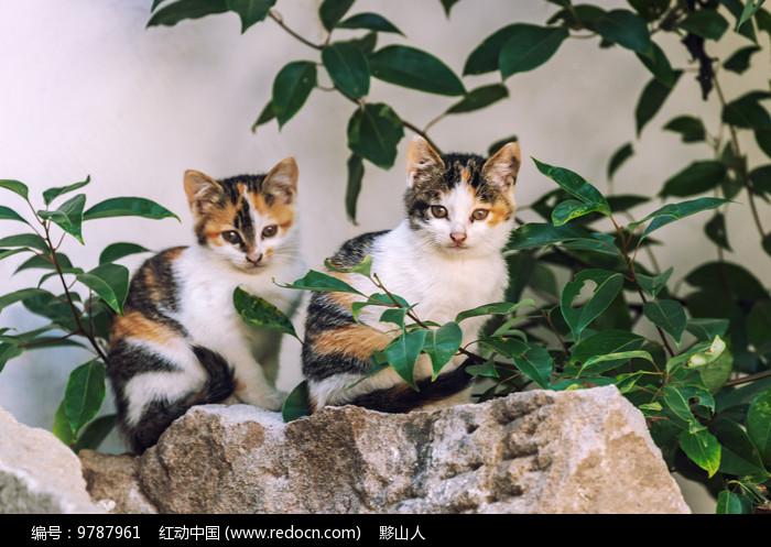 两只小花猫图片