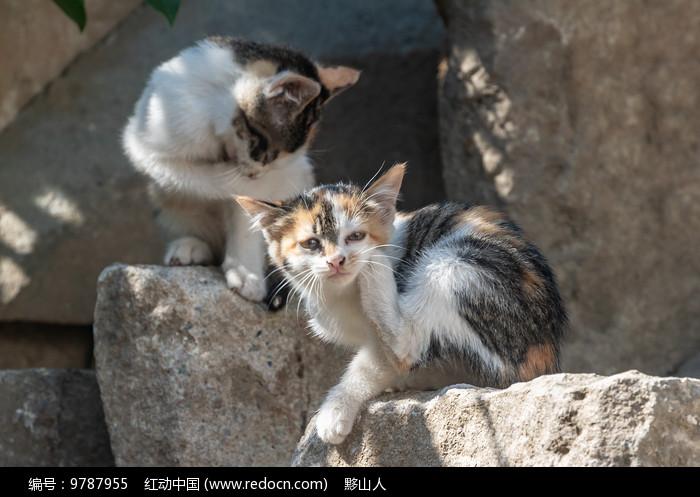 两只小花猫都在挠痒痒图片