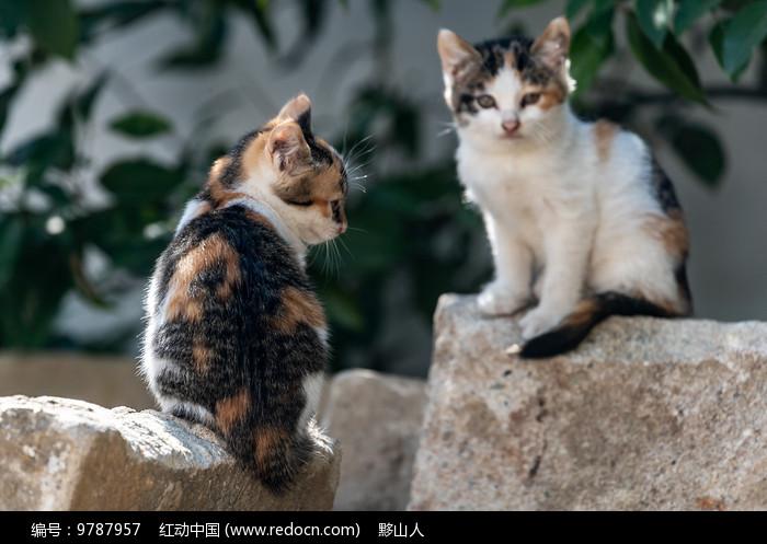 两只小花猫相对坐着图片