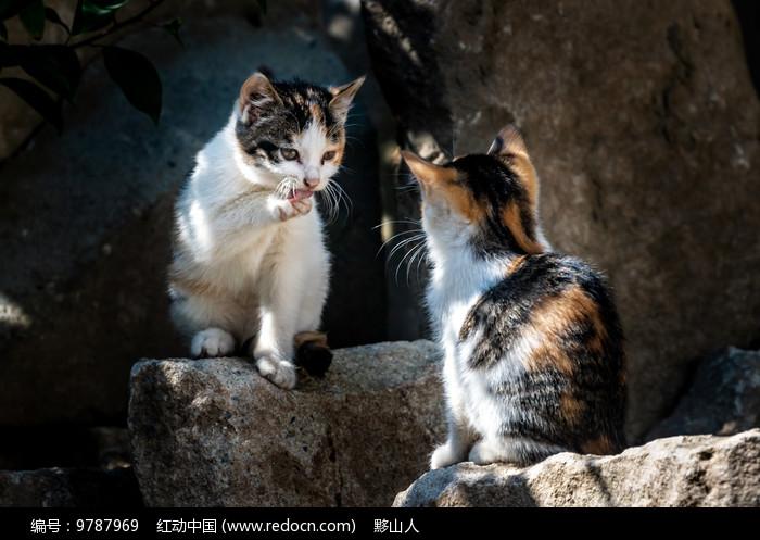 两只小花猫相视对着图片