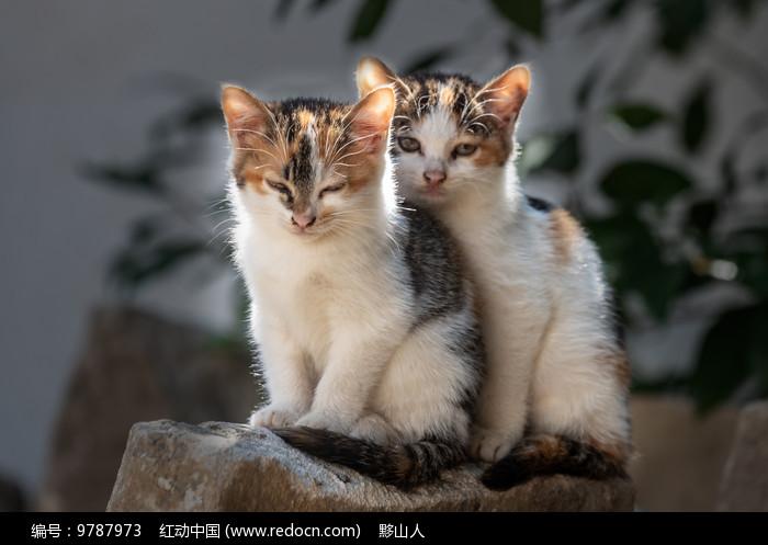 两只小花猫在打盹图片