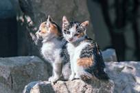 两只小花猫在晒太阳