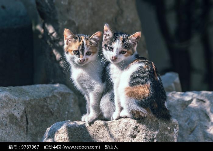 两只小花猫坐在一块图片