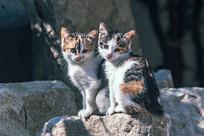 两只小花猫坐在一块