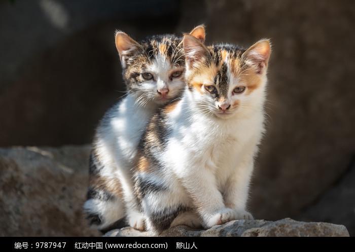 两只小猫相互依偎着图片