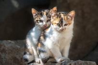 两只小猫相互依偎着