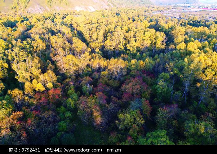 树林秋色秋景图片