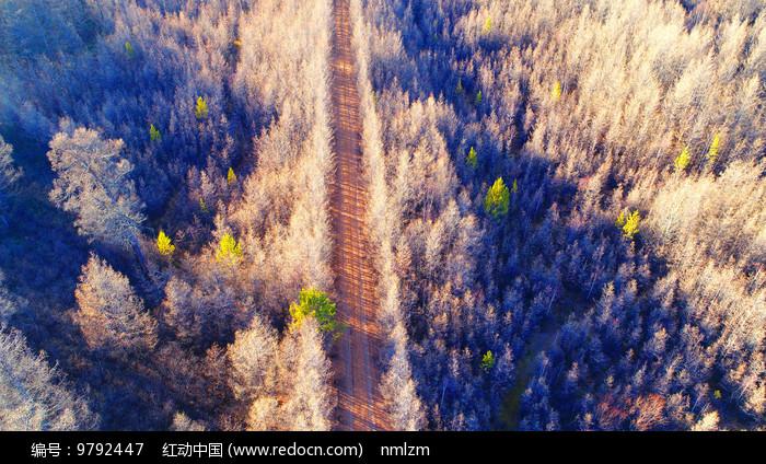 晚秋树林里的山路图片