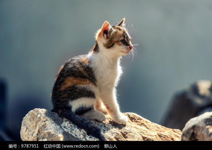 小花猫双眼注视着前方图片
