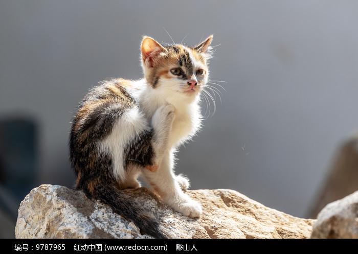 小花猫在挠痒痒图片