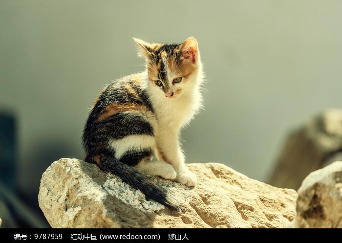 小猫瞪大双眼回头注视着图片