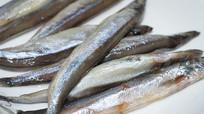 新鲜多春鱼