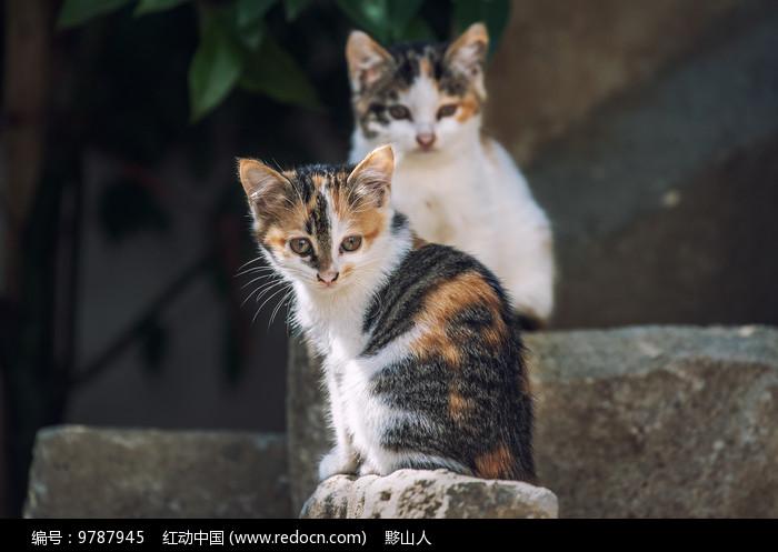 一对小花猫图片