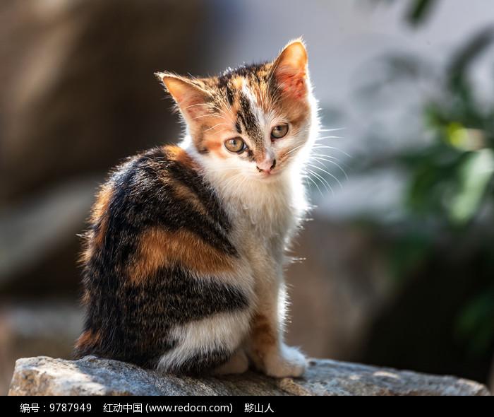 一只小花猫图片