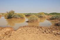 戈壁泥塘动物饮水水源地
