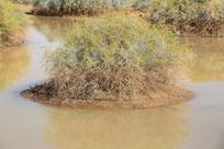 西北戈壁的动物水源地