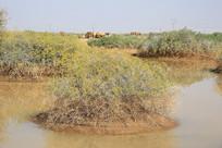 大漠戈壁滩动物饮水地