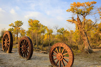 额济纳胡杨树林和马车轮