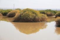 戈壁水塘骆驼水源地