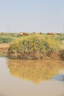 戈壁滩动物水源地