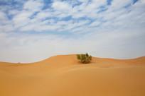 沙漠上的绿色植物
