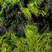 餐厅绿色植物装饰油画