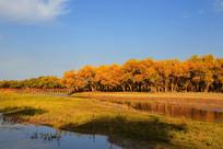 额济纳胡杨林的一道桥晨光