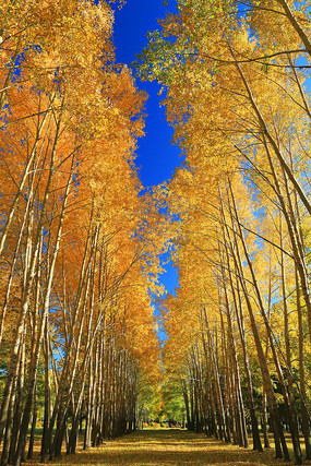 秋日树林小路