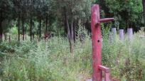 树林里的木人桩