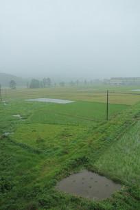 下雨天的田野