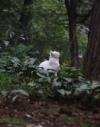 树林里的猫