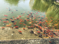 水里面的观赏鱼