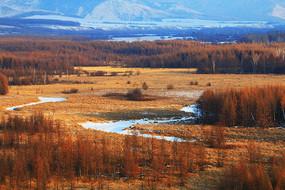 冬季山野树林