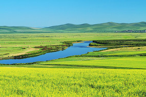 河湾绿野农田油菜花风景