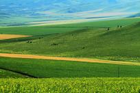 原野农田风景